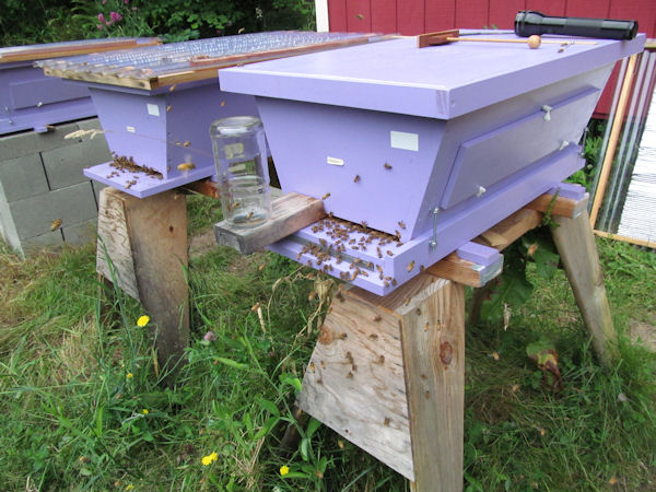 Kenyan Top Bar Hive built from Backyard Hive golden mean plans