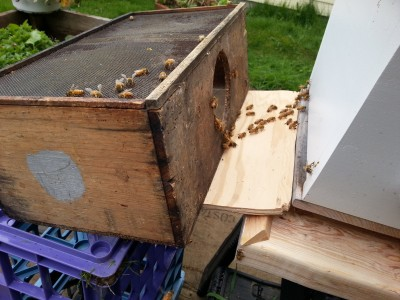 Bees walk into hive